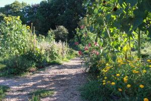 Rozvoj sociálního zemědělství v ČR