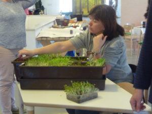 Měkká hranice mezi sociálním zemědělstvím a zahradní terapií